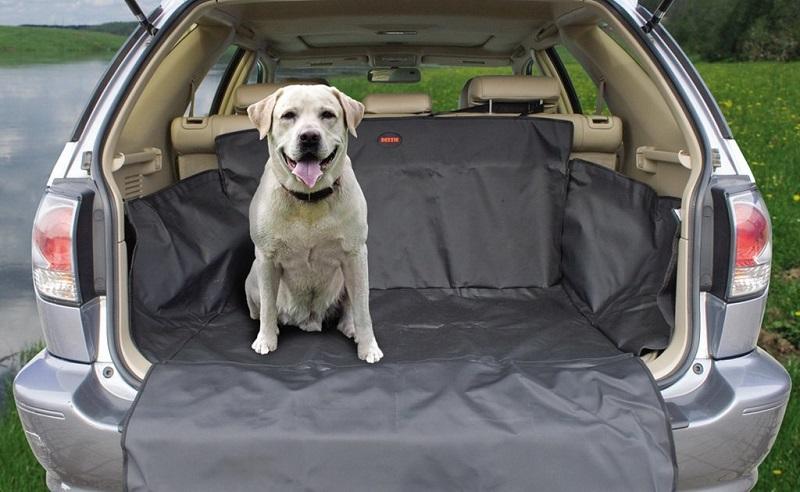 Как перевозить животных в автомобиле
