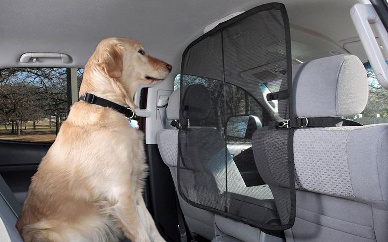 Как научить питомца знать свое место в машине