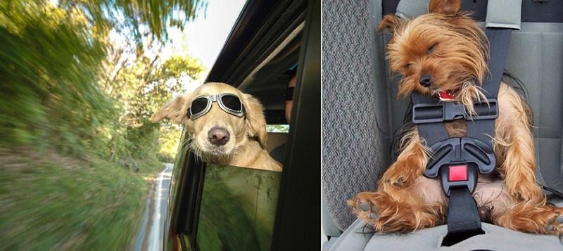Особенности перевозки собаки