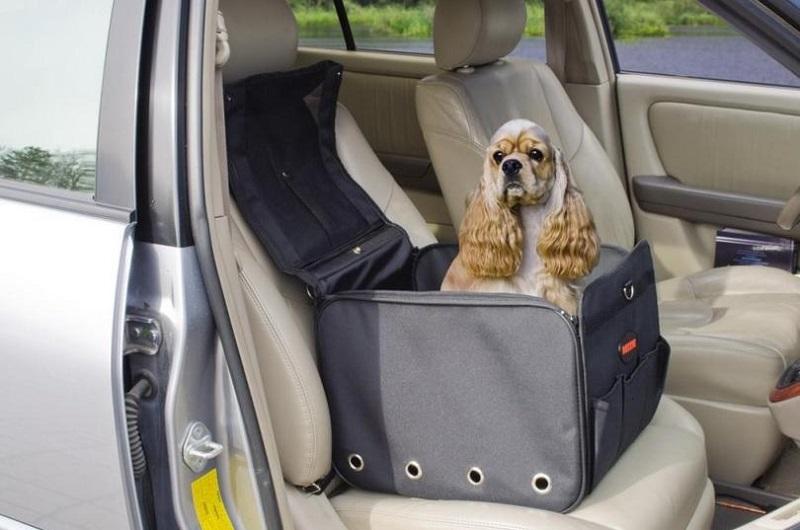 Полезные аксессуары для перевозки собак