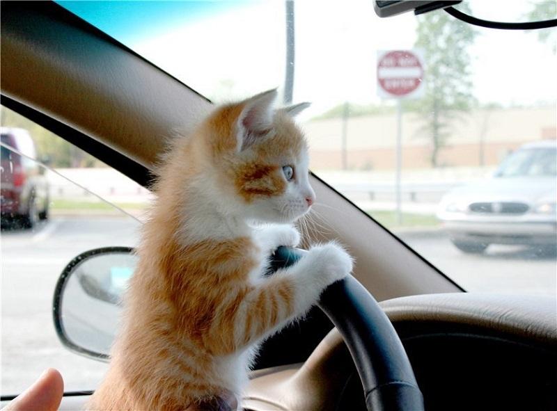 Правила транспортировки кошек